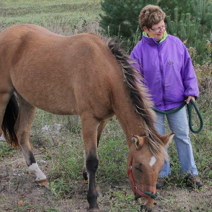 Pony-Volunteering