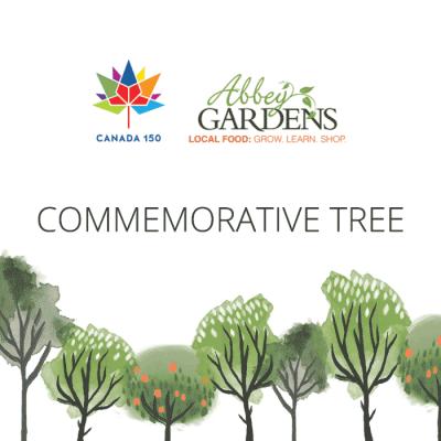 Canada-150-tree-product-image
